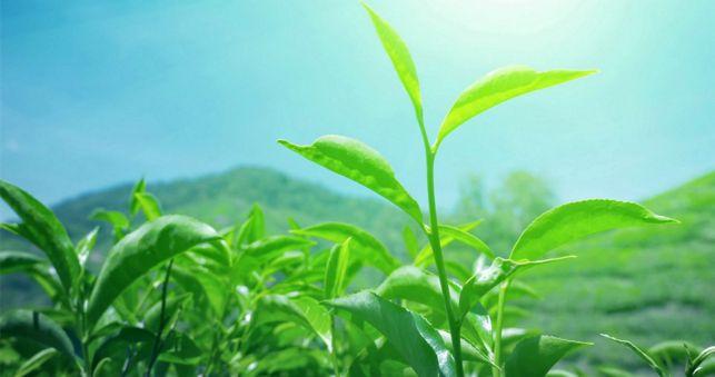fresh-green-leaves-9
